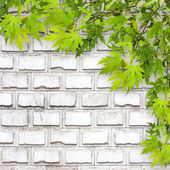 Bright green foliage on background of a white brick wall — Stock fotografie