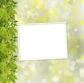 Green branch of  tree and paper frame on abstract background wit — Stock Photo