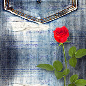 Beautiful red rose on old jeans background — Stock Photo