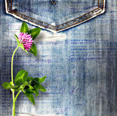 Beautiful pink clover on old jeans background — 图库照片