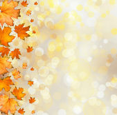 Orange autumnal branch of  tree on abstract background with boke — Foto de Stock