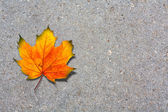 Autumn maple leaf on old paved road — Stock Photo