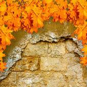 Feuilles d'automne orange vif — Photo