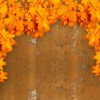 Bright orange autumn leaves on the background of rusty metal wal — Stock Photo #51404327