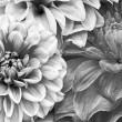 Monochrome Bouquet of Dahlia Flowers — Stock Photo