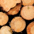 Wood Logs — Stock Photo #12762580