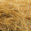 Stock Photo: Wheat Straw