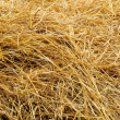 Wheat Straw - Stockfoto