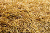 Wheat Straw — Stock Photo