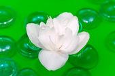 White Jasmine Flower Floating on Water — Stock Photo