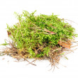 Clump of Green Moss Isolated on White Background — Stock Photo #13247480