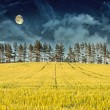 Mysterious Landscape – Yellow Field, Pine Trees, Moon and Dark Night Sky — Lizenzfreies Foto