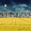 Mysterious Landscape – Yellow Field, Pine Trees, Moon and Dark Night Sky — Stock fotografie