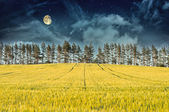 Mysterious Landscape – Yellow Field, Pine Trees, Moon and Dark Night Sky — Stock Photo