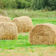 Hay Bales in the Field — Stock Photo