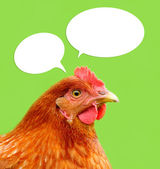 Red Chicken with Thought Balloons on Green Background — Stock Photo