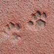 Stock Photo: Cat Paw Prints in Concrete