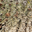 Tree Fungi - Stock Photo