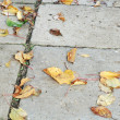 Fallen Autumn Leaves on the Ground (HDR Image) — Stock Photo