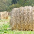 Stock Photo: Straw Bales in Field