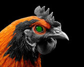 Terminator Chicken with Glowing Green Eye — Stock Photo
