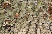 Tree Fungi — Stock Photo