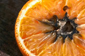 Rotten Orange with Mold (HDR Image) — Stock Photo