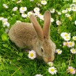 Cute Rabbit on Summer Lawn — Stock Photo