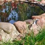 Stone Border Around Garden Pond - HDR Image — Stock Photo #14008828