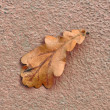 Dry Fallen Oak Leaf on Concrete Background in Autumn - HDR Image — Stock Photo