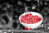 Frozen Cranberries on Tree Stump on Black and White Background — Stock Photo