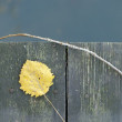 Old Wooden Fence with Yellow Leaf and Twig — Stock Photo #14102401
