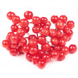 Red Guelder Rose (Viburnum Opulus) Berries - Photo