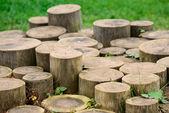 Tree Stumps — Stock Photo