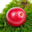 Cranberry on Green Moss Close-Up — Stock Photo #14391675