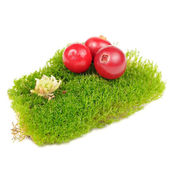 Cranberries on Clump of Green Moss Isolated on White Background — Stock Photo