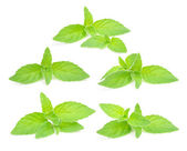Fresh Mint Set Isolated on White Background — Stock Photo