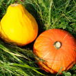 Stockfoto: Crop of Pumpkins on Grass