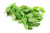 Fresh Green Mint Herb Isolated on White Background — Stock Photo