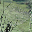 Spiderweb with Water Drops - Stock Photo