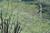 Spindelnät med vattendroppar — Stockfoto