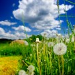 Summer Meadow — Stock Photo #26531371