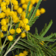 Yellow Acacia (Mimosa) Flowers and Leaves Closeup — Stock Photo