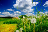 Yaz çayır — Stok fotoğraf