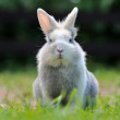 Cute Fluffy Rabbit — Stok fotoğraf