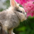 Stock Photo: Fluffy Rabbit on Tree Stump