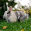 Cute Rabbit on Green Grass — Stock Photo
