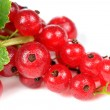 Redcurrant with Water Drops on White Background — Stock Photo