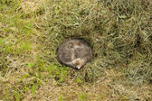 Homeless Cat Curled Up into Ball Sleeping on the Ground — Stock Photo