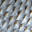 Stock Photo: Real Roach Fish Scales Macro Background